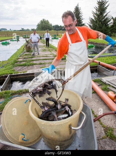 Trout farmer stock photos trout farmer stock images alamy for Keller fish farms