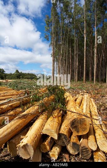 logging deforestation nr Yolla Cam Valley north west Tasmania Australia - Stock Image
