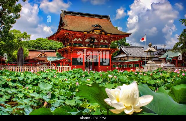 Japan, Chita, Okazaki, Lotus blossom in foreground and shinto shrine in background - Stock Image