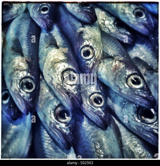 Sardines fishes close up on a market in Barcelona, Catalonia, Spain - Stock Image