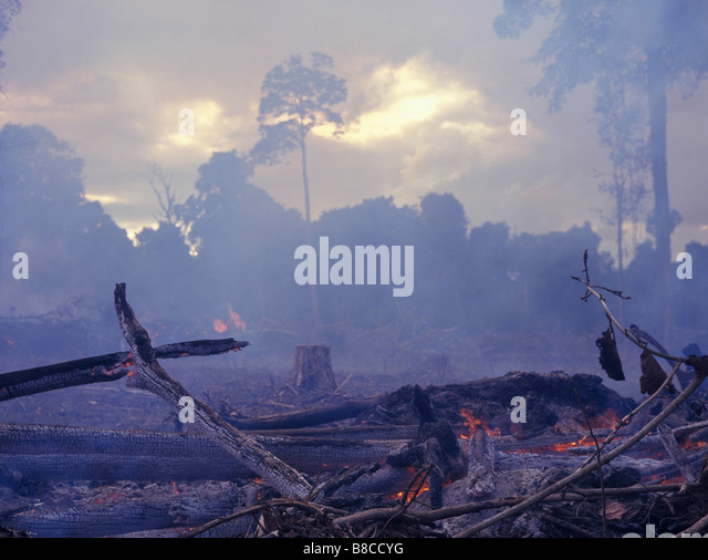 Tropical Rainforest Destroyed by Burning - Stock Image