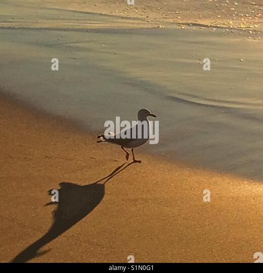 Seagull shadow on sand - Stock Image