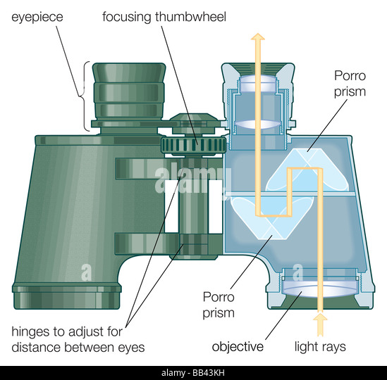 A cutaway view shows how light passes through the lenses and prisms of binoculars. - Stock Image