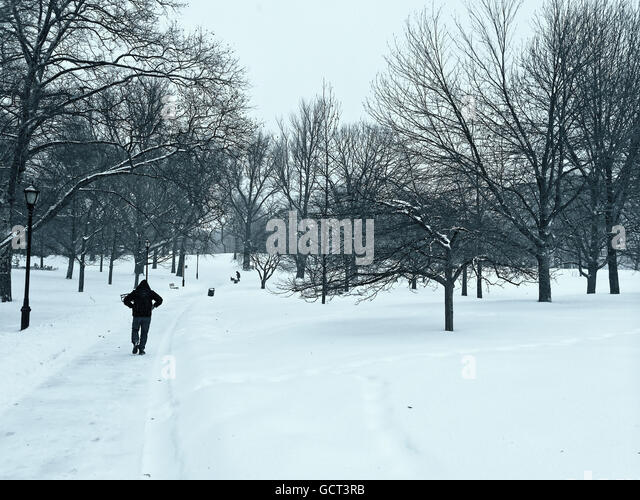 Man walking through a stark snow covered Prospect Park, Brooklyn. - Stock Image