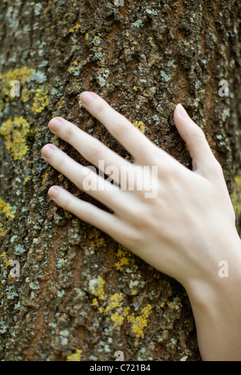 Woman's hand touching tree bark, cropped - Stock Image