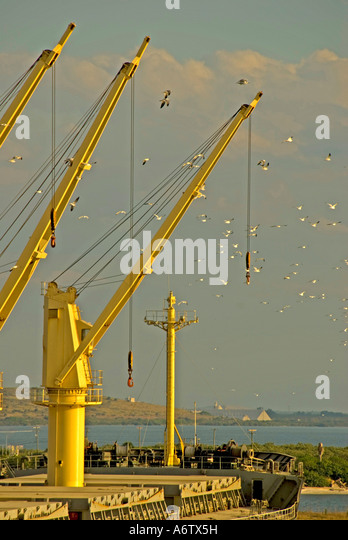 Tampa Bay Florida  Port of Tampa bright yellow loading cranes open space text space copy space type space - Stock Image