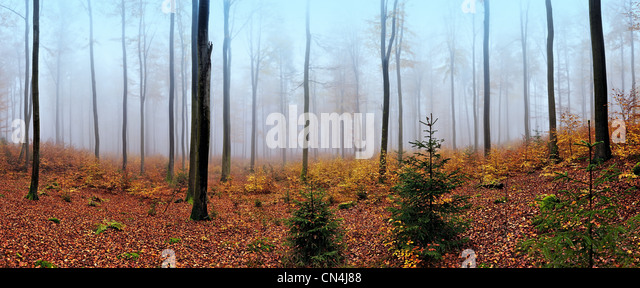 Panoramic view of misty forest in autumn, near Frankfurt, Germany - Stock Image
