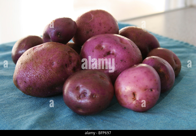 A handful of Potato Arran Victory ready for preparation in the kitchen - Stock Image