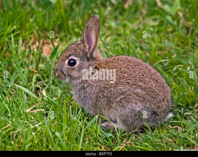 Baby Rabbits Stock Photos & Baby Rabbits Stock Images - Alamy