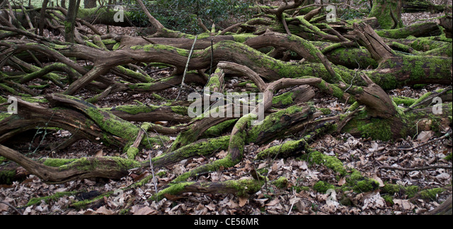 Damp Logs Stock Photos & Damp Logs Stock Images - Alamy