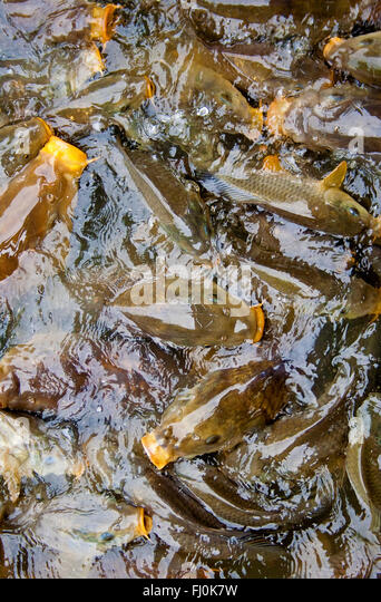 Stocked stock photos stocked stock images alamy for Mass fish stocking