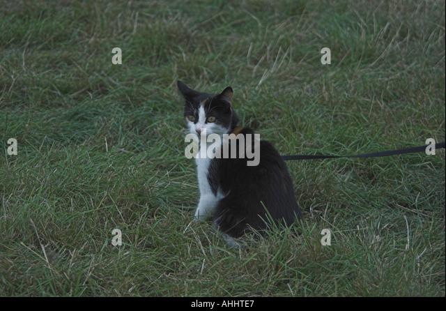 Domestic cat at Cropredy Music Festival 2005 - Stock-Bilder