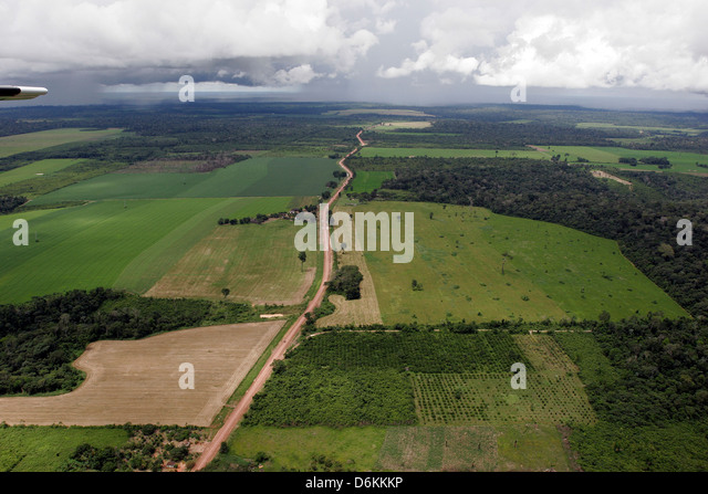 Soy plantation in Amazon rainforest, near Santarem, Para State, Brazil. Deforestation for the agribusiness - Stock Image