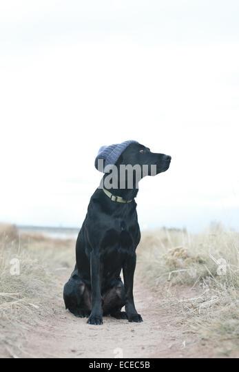 Black dog wearing knit cap sitting on footpath - Stock Image