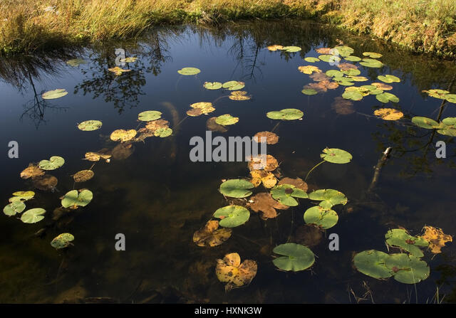 Roses pond stock photos roses pond stock images alamy for Kleiner teich
