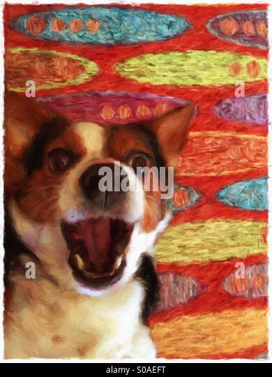 Dog on colorful rug with open mouth - Stock Image