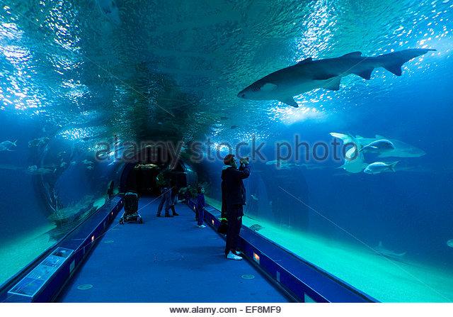 Oceanografic Stock Photos & Oceanografic Stock Images - Alamy