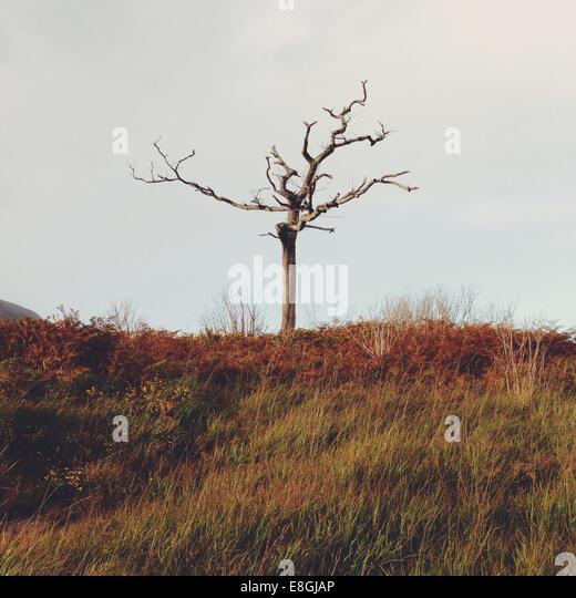 Ireland, County Kerry Ireland, Killarney, Munster, Lone tree in Kerry mountains - Stock-Bilder