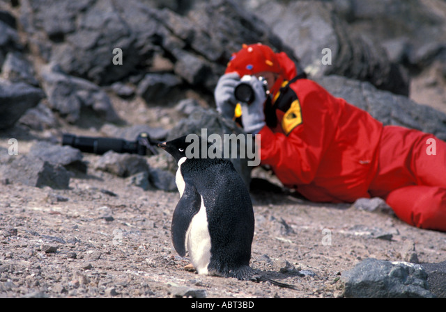ANTARCTICA Tourist taking photograph of Adelie penguin King George Island - Stock Image