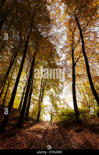 Mysterious dark autumn forest landscape. - Stock-Bilder