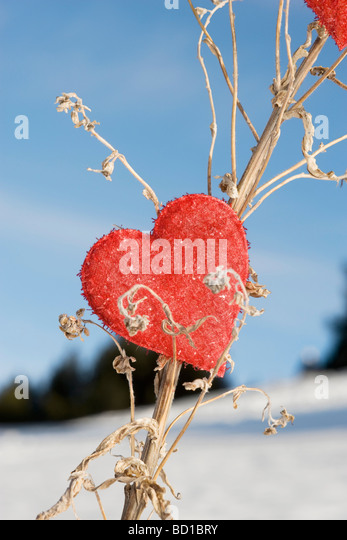 Heart shaped ornament on dried plant stalk - Stock Image