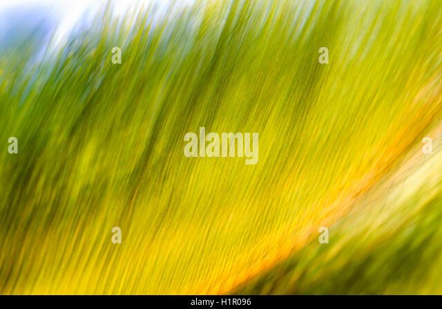 Sago palm frond, multiple exposure image, impressionistic photo. - Stock Image