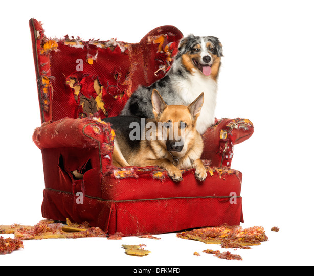 Comfort Dogs Stock Photos Amp Comfort Dogs Stock Images Alamy