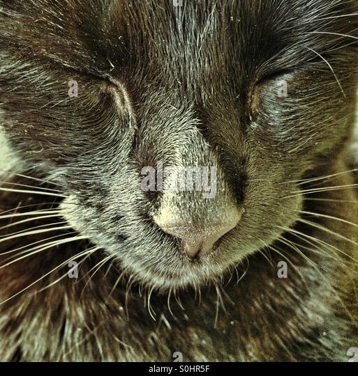 Close up of a black cat with its eyes closed. - Stock Image