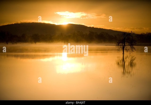 Trees and reflections in water at sunrise - Stock-Bilder
