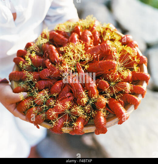 close-up color image crayfish crayfish party detail dill food food and drink serving dish square Swedish tradition - Stock-Bilder