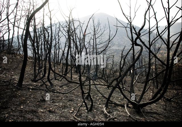 Italy, Abruzzo, Capestrano - 2007. Wildfire - Stock Image