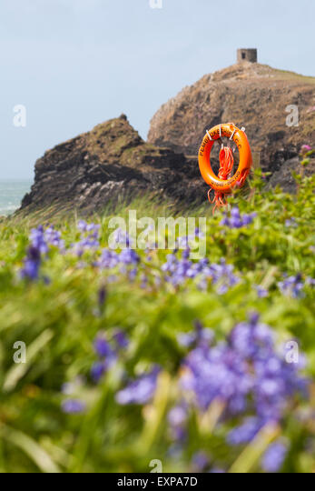 Bluebells, cliffs and tower at Abereiddy, Pembrokeshire Coast National Park, Wales in May - Stock-Bilder