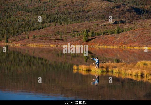 Fly fisherman casting over Wonder Lake, Denali National Park and Preserve, Interior Alaska, Fall - Stock Image