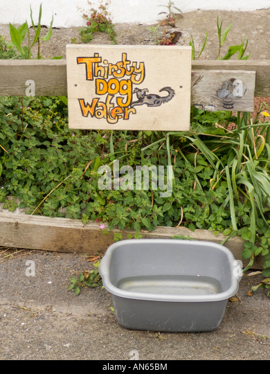 Holiday cottage at Llanmadoc Wales offering dog water after walk walkies - Stock Image