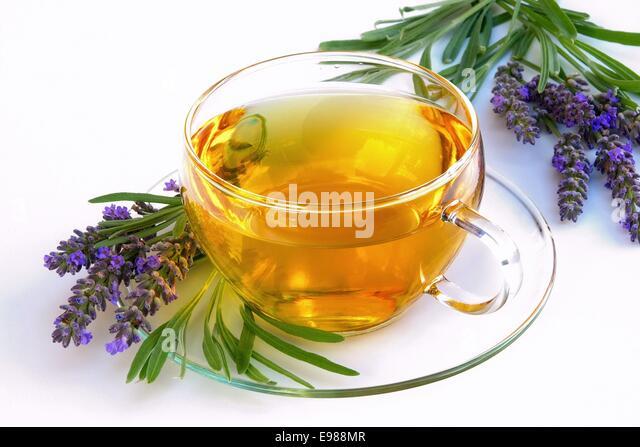 medicinal plant lavender lavendel lavendula stock photos. Black Bedroom Furniture Sets. Home Design Ideas