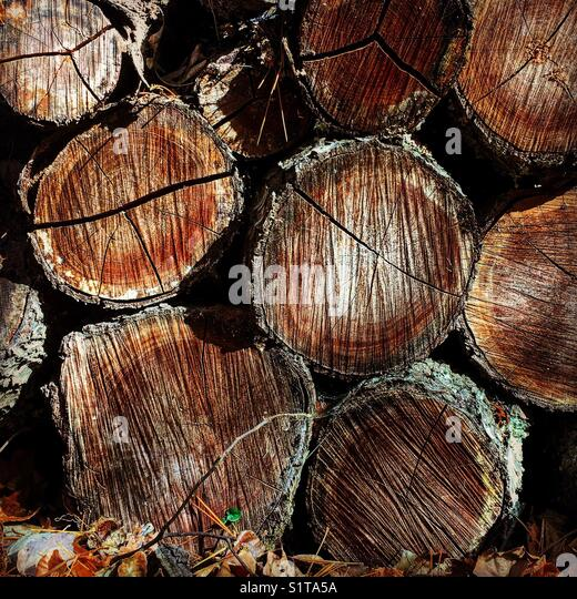 Fire wood - Stock Image