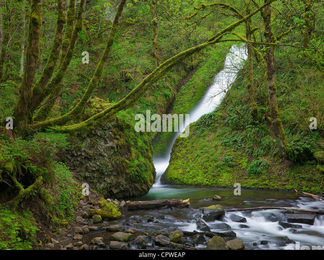 Mount Hood National Forest, OR: Spring flow of Bridal Veil Falls in a moss covered canyon - Stock Image