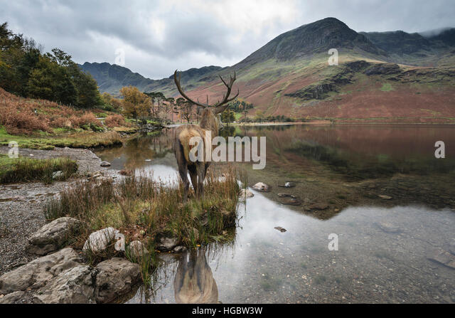 Landscaping Ties Red Deer : Stag rocks stock photos images alamy