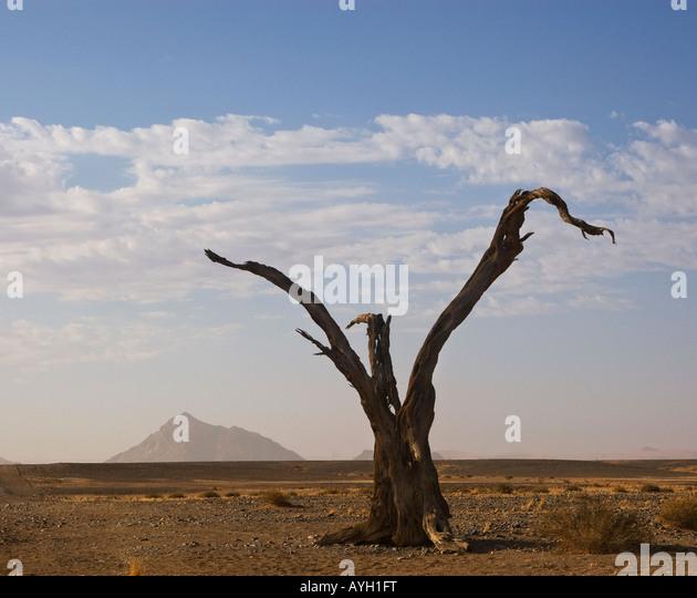 Dead tree, Namib Desert, Namibia, Africa - Stock Image