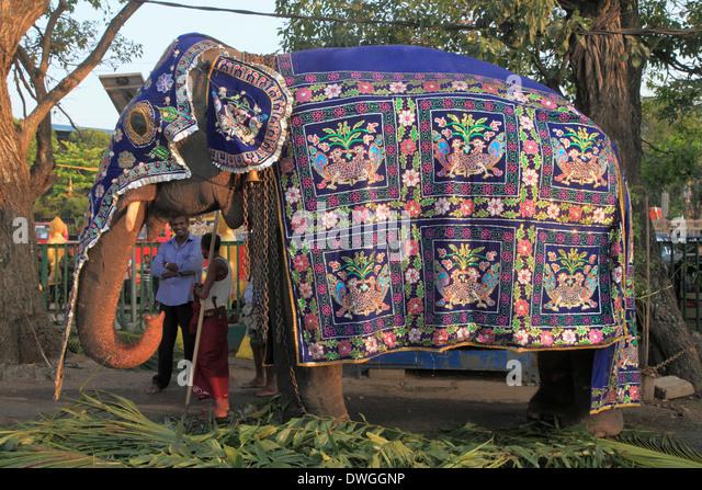 Elephant Sri Lanka Festival Stock Photos & Elephant Sri ...