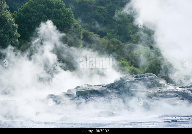 Rotorua, Whakarewarewa thermal area - Stock Image