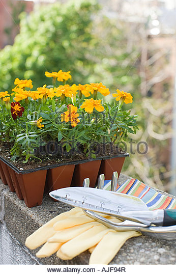 Household outside stock photos household outside stock for Gardening tools list 94