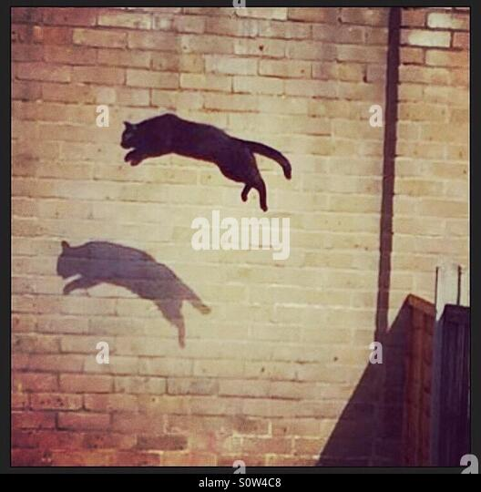 Black cat jumping and casting its shadow on a brick wall - Stock Image
