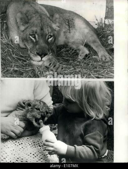 Feb. 05, 1970 - Lion Cub born to Vinnie the Lioness after a Caesarian ...