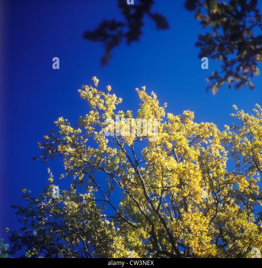 Autumn. Soft focus image. - Stock Image