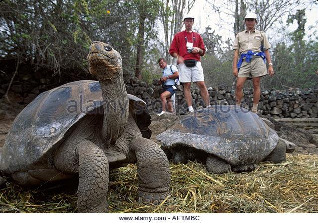 Ecuador Galapagos Islands Santa Cruz Island Charles Darwin Research Station Giant Tortoise visitors - Stock Image