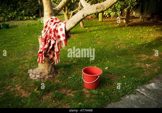 Tree blanket bucket garden - Stock-Bilder