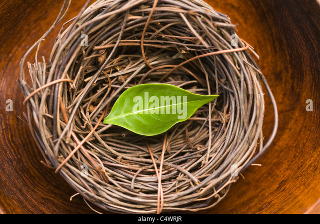 USA, Florida, green leaf in bird's nest - Stock Image