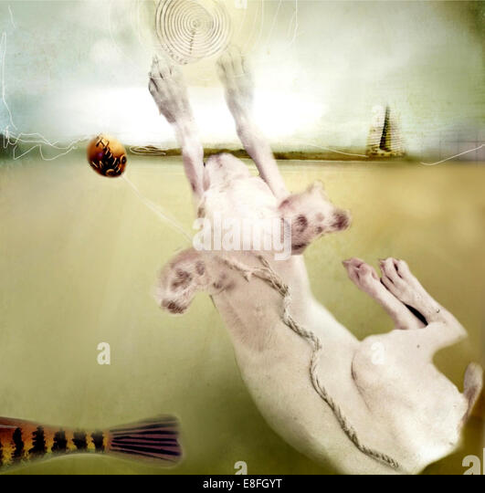 Conceptual dog - Stock Image