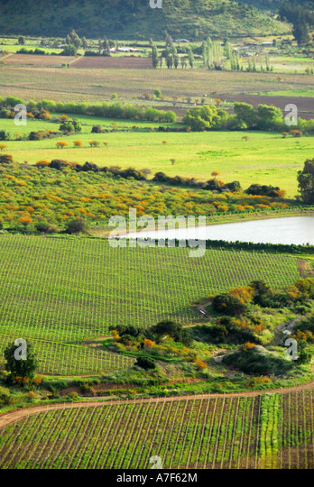 Chile wine country Colchagua Valley - Stock Image